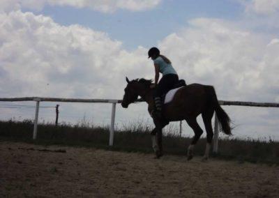 oboz-konie-2011-0212