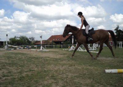 oboz-konie-2011-0213