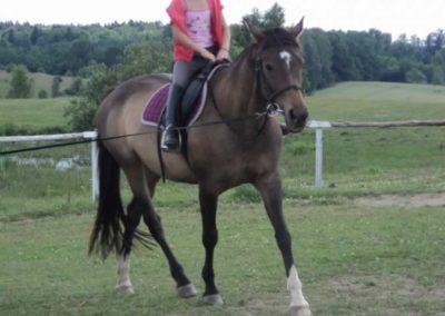 oboz-konie-2011-0214