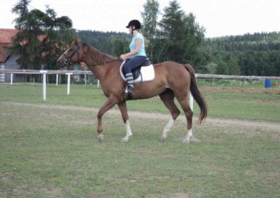 oboz-konie-2011-0216