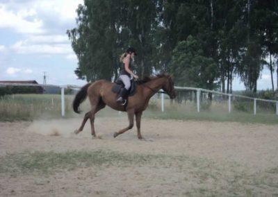 oboz-konie-2011-0218