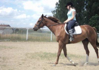 oboz-konie-2011-0219
