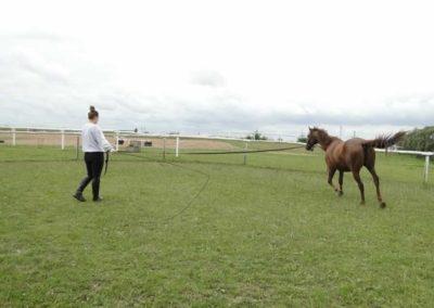 oboz-konie-2013-1-0035