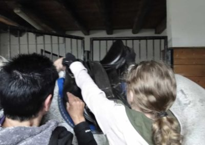 oboz-konie-2013-1-0047