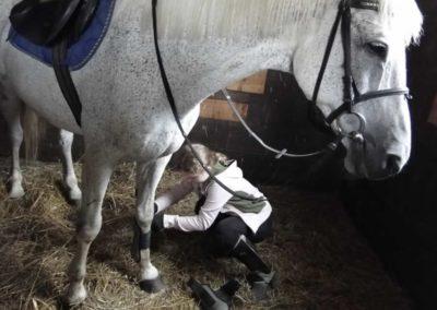 oboz-konie-2013-1-0048