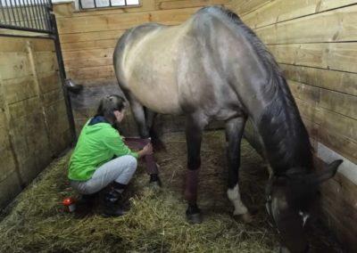 oboz-konie-2013-1-0070