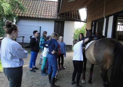 oboz-konie-2013-1-0078
