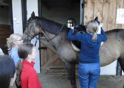 oboz-konie-2013-1-0079