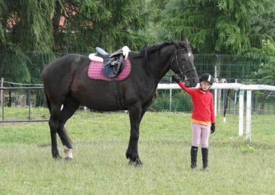 oboz-konie-2013-2-0007