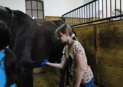 oboz-konie-2013-3-0001