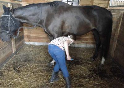 oboz-konie-2013-3-0013
