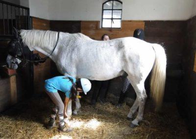 oboz-konie-2013-3-0014