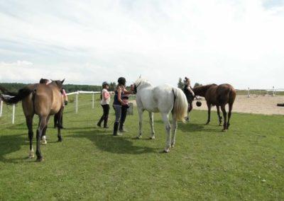 oboz-konie-2013-3-0016