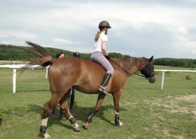 oboz-konie-2013-3-0019