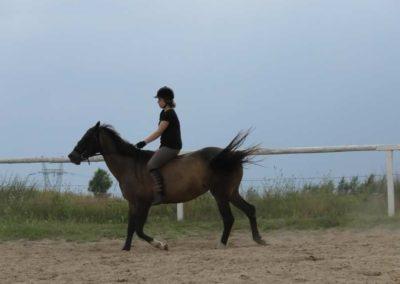 oboz-konie-2013-3-0030