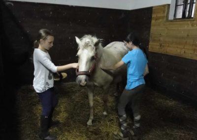 oboz-konie-2013-3-0031