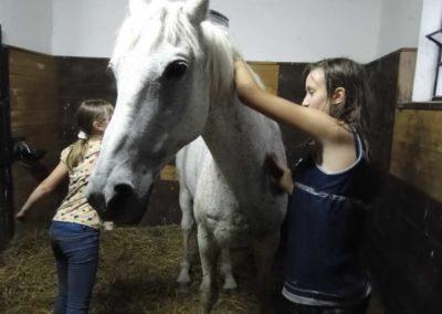 oboz-konie-2013-3-0032