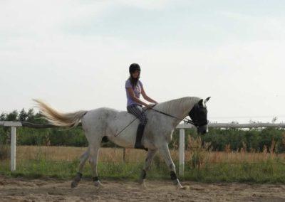 oboz-konie-2013-5-0019