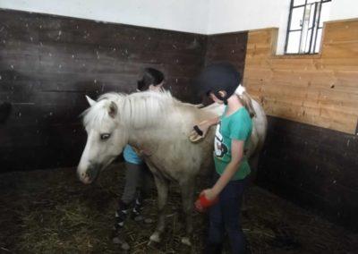 oboz-konie-2013-6-0004