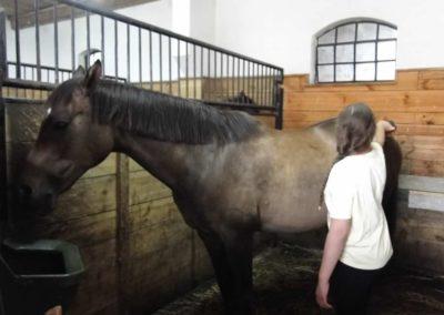 oboz-konie-2013-6-0005