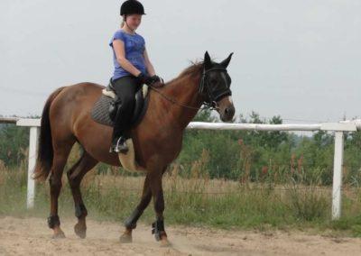 oboz-konie-2013-6-0007