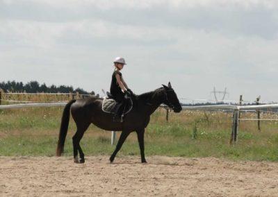 oboz-konie-2013-7-0005