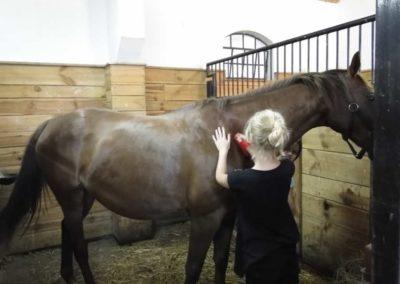 oboz-konie-2013-7-0013