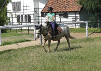 oboz-konie-2013-7-0033