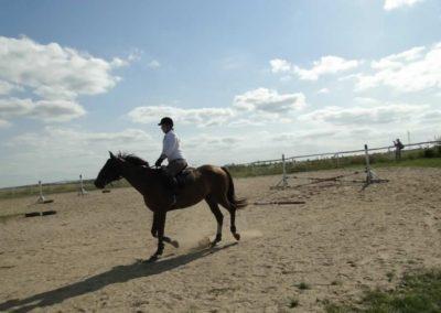 oboz-konie-2013-7-0065
