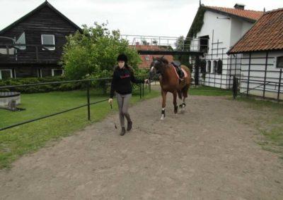 oboz-konie-2014-1-0001