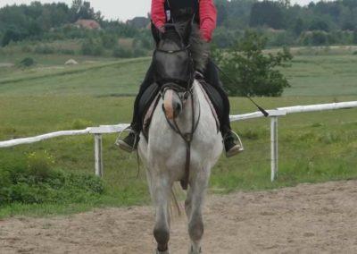 oboz-konie-2014-1-0016