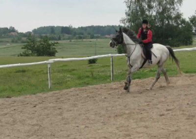 oboz-konie-2014-1-0061