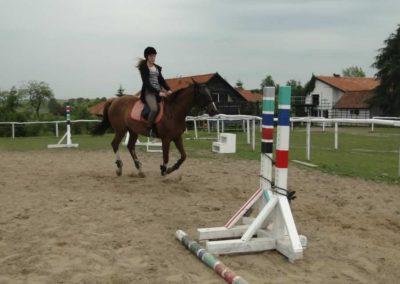 oboz-konie-2014-1-0062