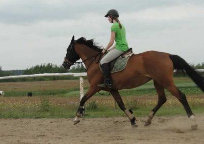oboz-konie-2014-1-0067