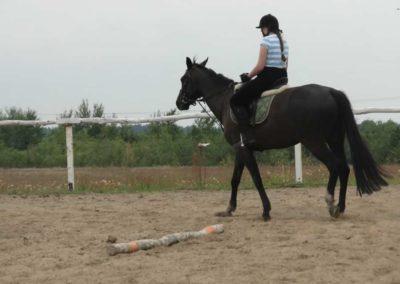 oboz-konie-2014-1-0072