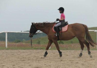 oboz-konie-2014-1-0073