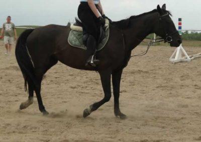 oboz-konie-2014-1-0075