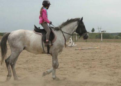 oboz-konie-2014-1-0076