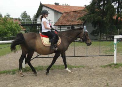 oboz-konie-2014-1-0084