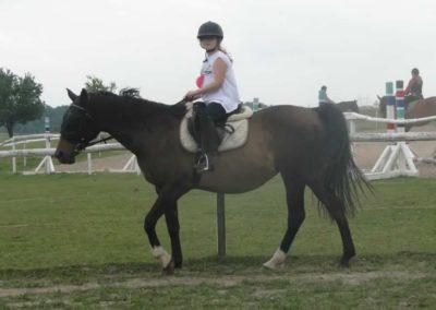 oboz-konie-2014-1-0123