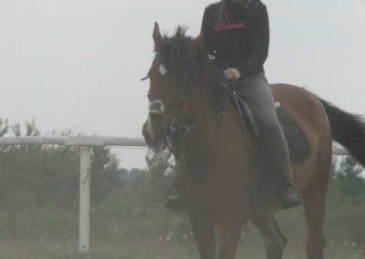 oboz-konie-2014-1-0128