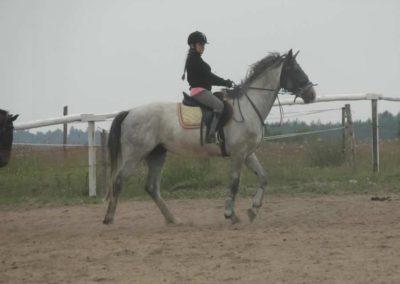 oboz-konie-2014-1-0129