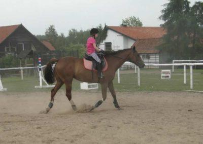 oboz-konie-2014-1-0133
