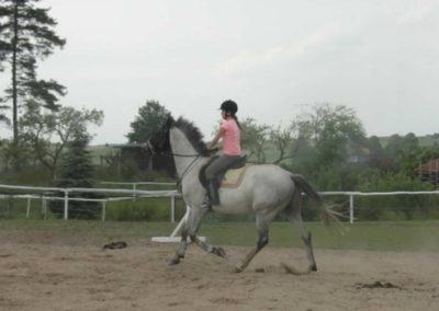 oboz-konie-2014-1-0143