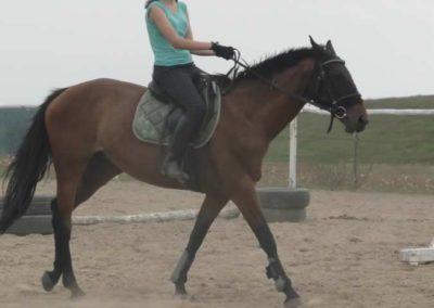 oboz-konie-2014-1-0150