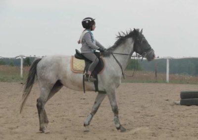 oboz-konie-2014-1-0152