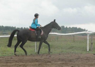 oboz-konie-2014-2-0006