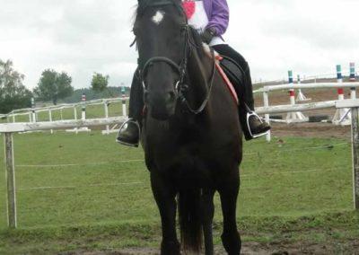 oboz-konie-2014-2-0011