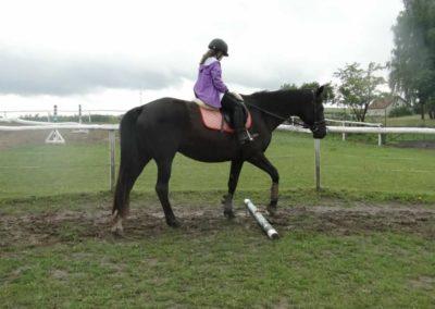 oboz-konie-2014-2-0012