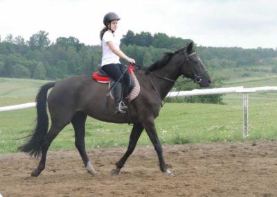 oboz-konie-2014-2-0018